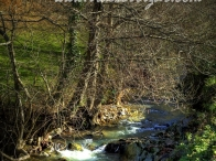 Rio Indusi – Dima (Gorbeialdea)
